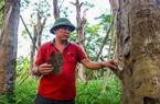106 cây xanh bị di dời để xây đường sắt Nhổn - Ga Hà Nội giờ ra sao?