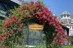 Tặng 250.000 đồng khi mua vé cáp treo mùa hoa nở rộ tại Fansipan