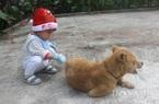 Nuôi 1 con chó hay 1 con mèo cũng phải kê khai, đăng kí