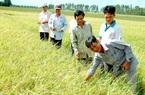 Miễn thuế sử dụng đất nông nghiệp có thể nảy sinh tư tưởng giữ đất dù bỏ hoang