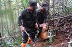 Đội tuần tra tháo bẫy thú rừng