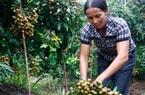 Dịch Covid-19: Nhiều tỉnh tăng đầu tư cho nông nghiệp
