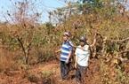 Tỉnh Gia Lai chỉ đạo tháo gỡ đền bù tiền tỷ trên 23,4 ha đất