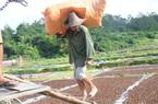 Lạng Sơn tập trung phát triển 4 sản phẩm nông nghiệp chủ lực