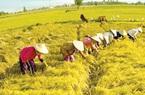 Tiếp tục miễn thuế sử dụng đất nông nghiệp