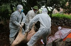 Quảng Ninh: Mua lợn giống trôi nổi, lại bùng phát dịch tả lợn châu Phi