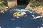 Bà Rịa – Vũng Tàu xử phạt 2 công ty gần 1 tỷ đồng vì vi phạm môi trường