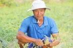 """Quảng Bình: Nắng nóng như đốt lò than, nông dân """"trốn"""" ông trời đi chăm dưa hấu"""