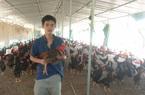 Gà nuôi chậm lớn, nông dân tố, doanh nghiệp cung cấp giống biệt tăm