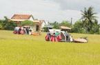 Sau lùm xùm điều hành xuất khẩu gạo, giá gạo lên đỉnh cao nhất trong 2 năm