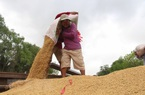 Giá gạo Việt Nam giao dịch ở mức thấp nhất trong hai tháng