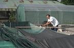 Lão nông nuôi ếch theo kiểu Israel thu tiền triệu mỗi ngày