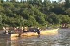 Lợn được mặc áo phao vượt sông thẩm lậu từ Lào về nội địa
