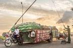 6 loại nông sản bị Campuchia cấm nhập khẩu: Không khai báo kiểm dịch thực vật