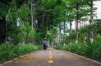 Trồng 600 nghìn cây xanh trong 2 năm, Hà Nội giờ thay đổi ra sao?