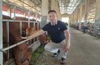 """Thái Bình: Đại gia bất động sản """"đùng đùng"""" bỏ phố về quê nuôi bò to tướng và cái kết bất ngờ"""