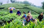 Kích cầu du lịch khu vực Đông Bắc: Khơi dậy tiềm năng du lịch Thái Nguyên