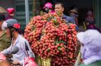 """70.000 tấn vải thiều Bắc Giang sẽ lên đường """"xuất ngoại""""  qua cửa khẩu Lạng Sơn"""
