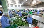 """Thêm """"cửa"""" giúp nông sản Việt chinh phục thị trường lớn"""