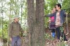 Về Cát Lình xem người Mông giữ rừng