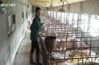 Lo ngại bệnh dịch tái diễn: Dân rụt rè trong việc tái đàn lợn