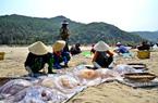 """Hà Tĩnh: Nắng nóng, gió Lào thổi bỏng rát, dân vẫn ra vớt """"lộc biển"""" kiếm bộn tiền."""