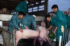 Cục Chăn nuôi chỉ tên một số doanh nghiệp chưa phối hợp giảm giá thịt lợn