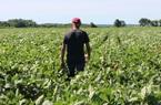 Nhà hàng đóng cửa vô thời hạn, nông dân Mỹ sống trong ác mộng triền miên