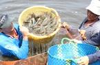 Thị trường đang cần gì ở tôm Việt?