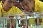 Khánh Hòa: Một người chơi cá ở Đà Nẵng đạt giải Nhất hội thi cá Betta toàn quốc năm 2020