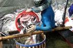 Cá tra, tôm sú thiệt hại trong tháng 7