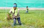 Phong trào nông dân ở Bắc Ninh xuất hiện nhiều cách làm mới
