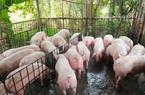 """Giá heo hơi hôm nay 4/7: Giá lợn im ắng, các """"ông lớn"""" vẫn lãi tiền tỷ mỗi ngày"""