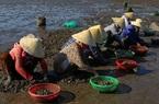 Chùm ảnh: Cào ngao thuê, chị em miền biển Nghệ An kiếm nửa triệu đồng/ngày