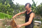 Ông lão 80 tuổi và bí quyết nuôi ong cho mật ngọt