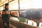 Những nông dân xứ Quảng làm giàu nhờ Internet