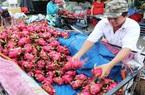 """Rớt giá, tắc đường xuất khẩu: """"Thảm họa kép"""" với trái cây Việt"""