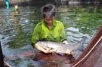 Thái Bình: Bí quyết nuôi những con cá khổng lồ của nông dân 9X cất bằng đại học, bỏ lương cao