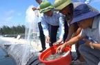 Hiệu quả từ việc đầu tư nuôi tôm tại khu vực miền Trung