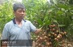 Sơn La: Bỏ ngô trồng cây ăn quả, biến đất dốc thành lợi thế
