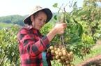 Hội Nông dân Yên Châu: Nhiều giải pháp giúp hội viên phát triển sản xuất