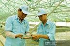 Bạc Liêu dành hơn 3.000 tỷ đồng nuôi tôm công nghệ cao