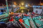 Cảng cá ở Đà Nẵng tấp nập trong những ngày Covid-19