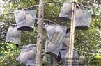 """An Giang: Sầu riêng Núi Cấm ngon cỡ nào mà được """"mặc áo giáp sắt"""" để bảo vệ"""