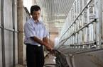 Đắk Lắk: Bỏ cà phê, hồ tiêu lấy đất xây chuồng nuôi heo công nghệ cao, ai ngờ nông dân này bỏ túi tiền tỷ