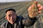 """Lương hưu chỉ đủ mua """"dầu và muối"""", cư dân nông thôn Trung Quốc tuyệt vọng"""