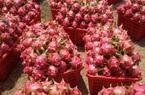 Biến động bên Tây, trái cây Việt gặp khó dội chợ, rẻ như rau