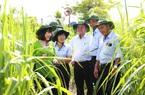 TTC Sugar thành lập Viện Nghiên cứu Ứng dụng Kỹ thuật Nông nghiệp TTC Attapeu