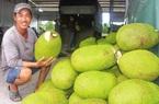 """Ngược chiều: Giá mít Thái tăng """"vù vù"""" giữa thời dịch Covid, xuất khẩu sang Trung Quốc tăng"""