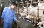 Giá lợn hơi về 80.000 đồng/kg, nông dân vẫn lãi hay chỉ hòa vốn?